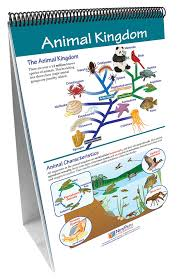 The Six Kingdoms Newpath Science Flip Chart Set