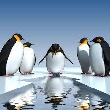penguin love wallpaper. Interesting Love Cute Penguin Love Wallpaper  Photo6 And Penguin Love Wallpaper P