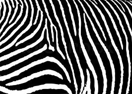 Zebra Patterns Beauteous Black And White Zebra Pattern Background With Simple Deisgn Stock