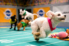 puppy bowl x halftime show. Delighful Puppy Nikita  Intended Puppy Bowl X Halftime Show
