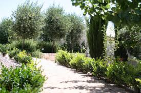 Small Picture Gravel paths and drought tolerant plantings of english box pencil
