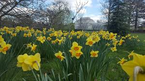 2018 daffodil gardens and events