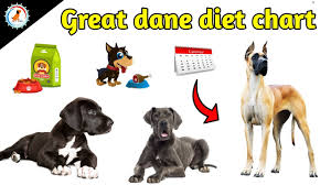 Great Dane Food Chart Great Dane Diet Chart In Hindi Great Dane Diet Plan