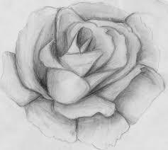 dibujos de rosas con sombras a lapiz buscar con google