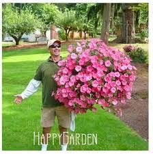 amazon flower seeds petunia super cascade mixed 100 pellets hanging baskets garden helper 93b7n0 garden outdoor