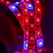 Red Tape Light Us 1 96 31 Off Led Plant Grow Lights 5050 Grow Led Flexible Strip Tape Light 4 1 4 Red 1 Blue Aquarium Greenhouse Hydroponic Plant Growing Lamp In