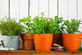 Potted Herbs on <b>Shelf</b> with <b>Shovel</b> and Watering Can - Photos by ...