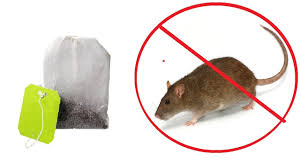 with just one tea bag you can get rid of mice and spiders in your home
