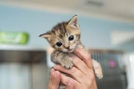 animal shelter kittens. Unique Shelter The Kitten Care Handbook On Animal Shelter Kittens I