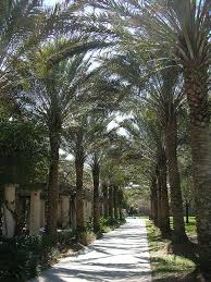best university of south florida images colleges  university of south florida love this