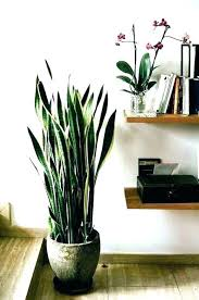 large house plants low light tall indoor trees ceramic pots for and