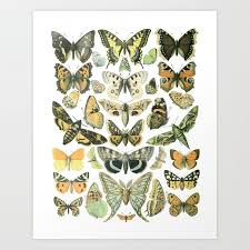 Botanical Chart Print Vintage Butterfly Botanical Chart 2 Art Print By Vintagequeen