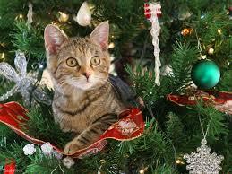 Les beaux sapins de Noël Images?q=tbn:ANd9GcSACeS8VCoB6vrp1bHoD5vUUHslI9OHCC-6TPmF1ollAwvFKe-y