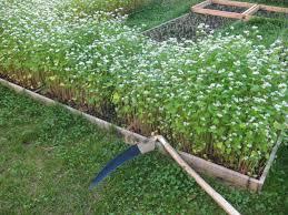 garden scythe. Modren Garden Best Garden Tool For 2014 Austrian Scythe On Garden O