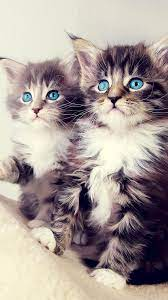 23 Kitten and Cat Iphone & Android ...
