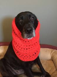 Dog Scarf Pattern Awesome Decorating Design