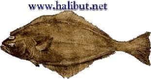 Halibut Weight Chart Physics Of Catching Halibut Sport Fishing