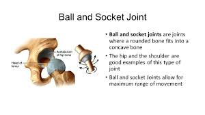ball and socket joint. ball and socket joint joints are where a rounded bone fits into