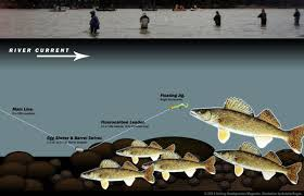 Image result for doing the jig walleye pics