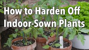 When To Sow Seeds Indoors Chart Starting Seeds Indoors Tips And Tricks For Starting Seeds