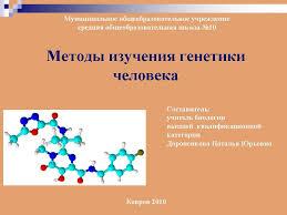 Методы изучения генетики человека Презентация к уроку