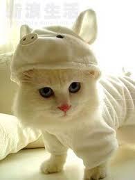 cute kittens in halloween costumes. Beautiful Halloween Want More Cute Kittens And Cute Kittens In Halloween Costumes