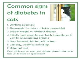 best food for diabetic cat. Dry Food For Diabetic Cats Understanding Can Save Your Cat Wet Best D . How Low
