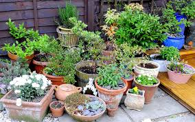 Small Picture Low Maintenance Outdoor Pot Plants Uk Low Maintenance Garden