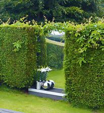 garden mirrors. Garden Acrylic Safety Mirror Mirrors D