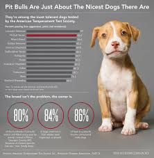 Pitbull Dog Years Chart Why Its Ridiculous People Still Think Pit Bulls Are