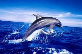 أكبر تجميع لأجمل صور من اعماق البحار (سبحان الله الخالق العظيم) Images?q=tbn:ANd9GcSAK5CJA_x5Cfs_QhOrc3cj9KWjLZCLYeWGRhYVgZqP0_Mu1B2n