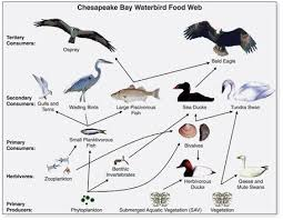 Create Flow Charts That Show Four Different Food Chains 3 Energy In Biological Processes