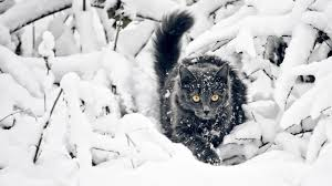 Winter Cat Wallpapers - Top Free Winter ...