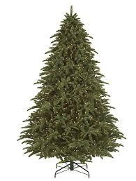 Shasta Fir Tree- child-1