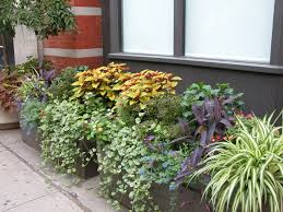 Small Picture Fine Container Garden Design G On Ideas