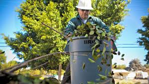 how much does it cost to hire a tree service tree cutting prices o55
