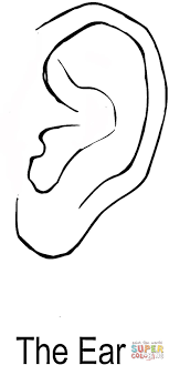 Small Picture The Ear coloring page Free Printable Coloring Pages