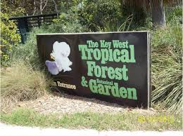 invasive exotic plant work at key west tropical forest botanical garden