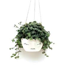 wall mounted plant holder wall mounted plant pot holders wall hanging plant flower pots hanging plants wall mounted plant holder