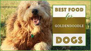 10 Best Highest Quality Dog Foods For Goldendoodles In 2019