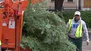 City begins new year going green with Christmas tree recycling program
