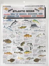 Fishermans Saltwater Fish Chart 5