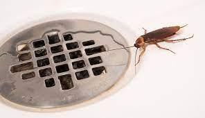 Bathroom Bugs Identification Tiny Bugs Found In Bathroom