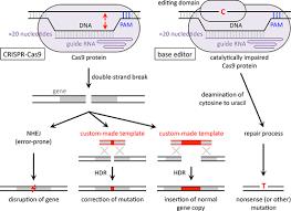 Genome Editing Crispr Cas9 Genome Editing For Treatment Of Atherogenic Dyslipidemia