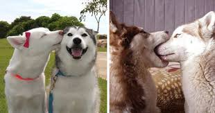 14 kissing s prove that kisses aren t just for people bored panda