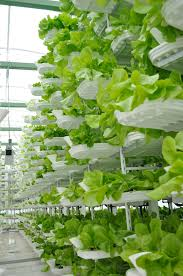Grow Lights Massachusetts Vertical Farming Wikipedia