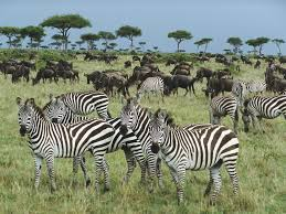 wild animals in african forest. Modren African Photo Gallery Of  Wild Animals In African Forest With A