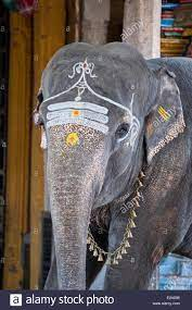 Elephant Blessing High Resolution Stock ...
