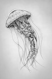 Small Picture Jellyfish Drawing Images draw from Pinterest Jellyfish