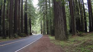 car going forest road ile ilgili görsel sonucu